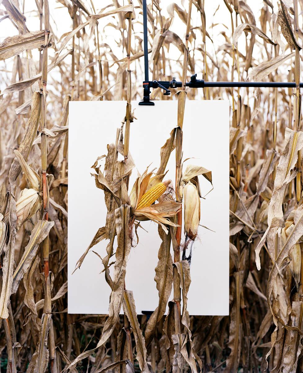 Mathieu Asselin (Γαλλία/Βενεζουέλα, γ. 1973)<br/><em>Van Buren, Indiana</em>, 2013<br/>Από τη σειρά <em>Monsanto: A Photographic Investigation</em>, 2016<br/>Ευγενική παραχώρηση του καλλιτέχνη