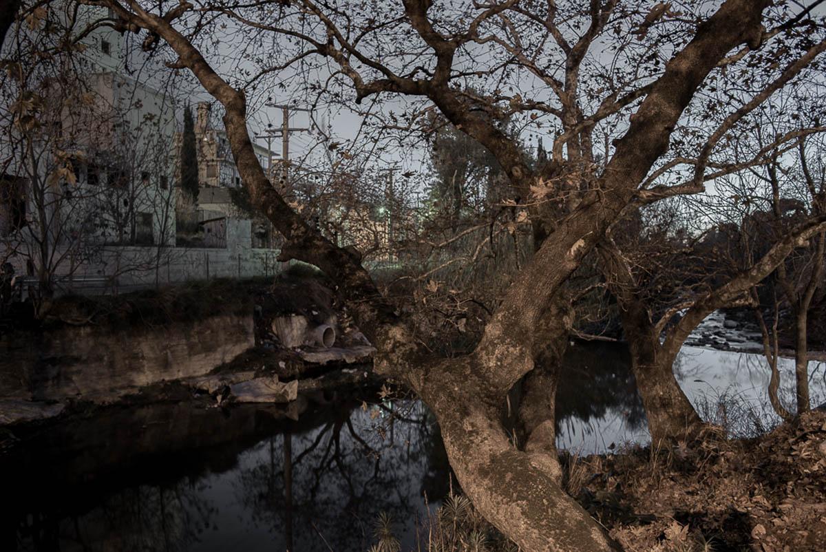 Ρέα Παπαδοπούλου, από τη σειρά <em>Dark Tree</em>, 2015- εν εξελίξει