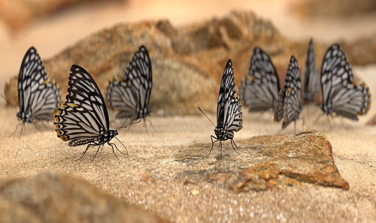 Jeffrey Stuker (ΗΠΑ, γ. 1979)<br/><em>Papilio Clytia (Dissimilis)</em>, 2021 <br/>Από τη σειρά <em>Next Year in Monte Carlo</em><br/>Ευγενική παραχώρηση του καλλιτέχνη